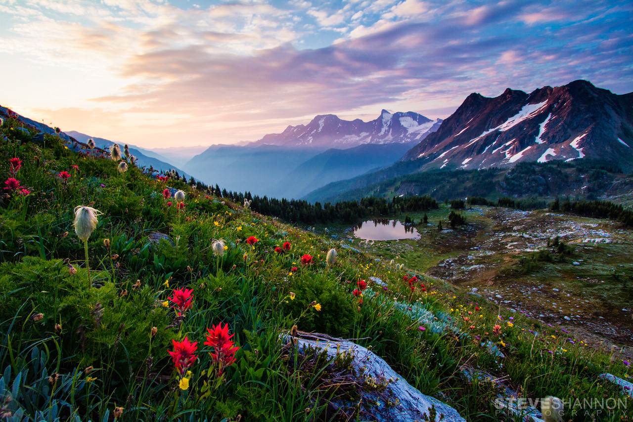 Alpine wildflowers at Jumbo Pass in the Purcell Mountains.