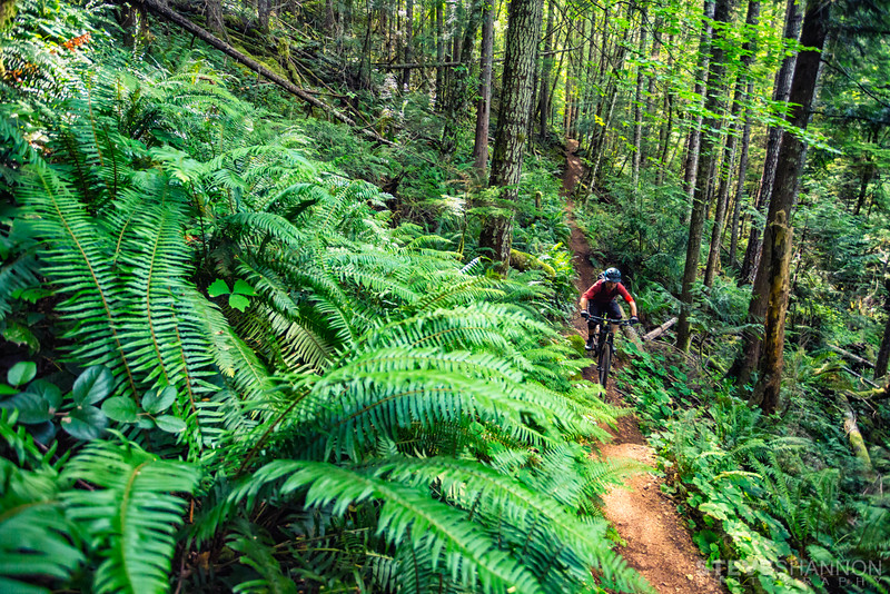 Trail: Catnip<br /> Location: Forbidden Plateau<br /> Rider: Kelsey Thompson<br /> Forbidden Plateau sits a few kilometres north of Cumberland, offering up more gravity oriented descents.  It's still pedal bike friendly though, and the coastal forest is absolutely beautiful.