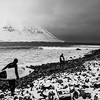 Walking out to Ollie's Point, a popular surf break in northern Iceland.