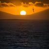 Albatross sunset, Falklands