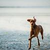 Dog on the beach, Cornwall