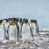 King Penguin March, Jason Harbour
