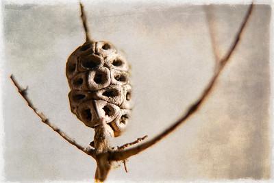 Tree Bulb 6_19 E_TB 6 No 1