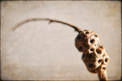 Tree Bulb 6_19 F_TB 8 No 3