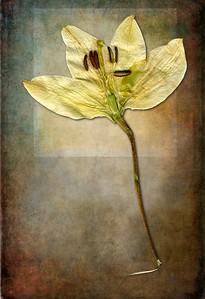 White Lily_Luminous Alchemy Ultra V3-02
