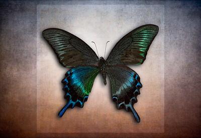 Blue Butterfly 10_19