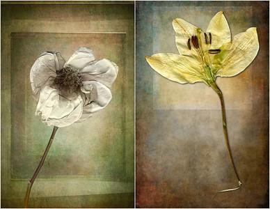 Flower Frames 2019