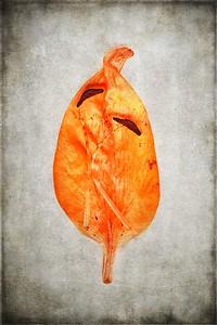 Orange Lily Stem 2_TB 5 No 2