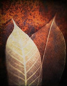 Two Leaves_TB 6 No 5
