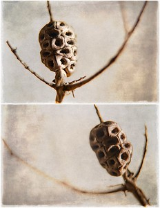 Tree Bulbs 2019
