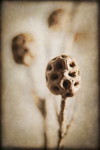Tree Bulb 6_19 C_TB 6 No 3