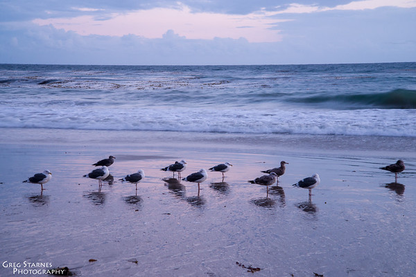Birds at the Seashore