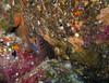 stout moray eel