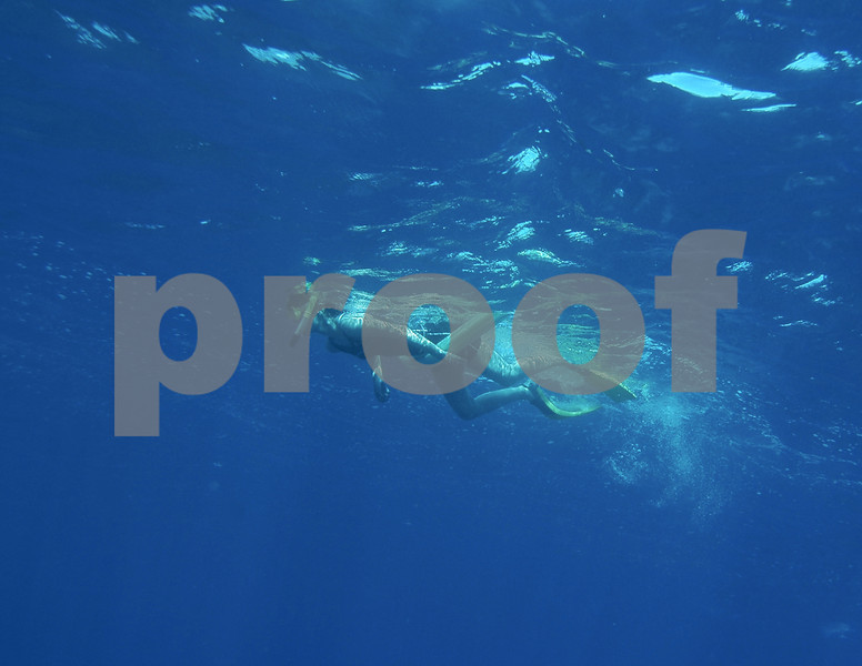 Dolphin swim 100908