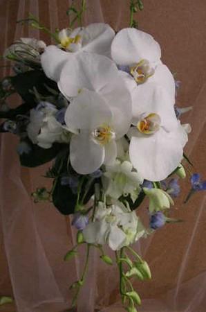 Cascade bouquet- Phale orchids, small orchids, blue delphinium $135
