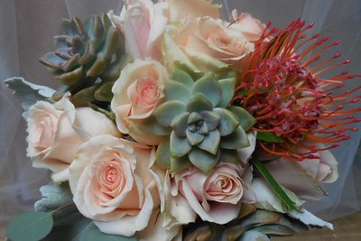 Succulents , pincushion, peach, pink roses $135