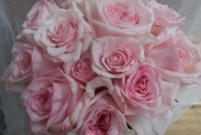 Pink Ohara garden roses  $110