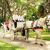 In a horse-drawn carriage, wearing a gorgeous white dress, the bride arrives to meet her wedding party and unite with her groom. This was so exciting to watch!