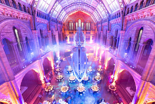 Wedding in the Natural History Museum of London
