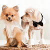Dog marriage at Villa Dezecheo