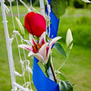 Stello wedding flowers on trellis