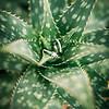 Dallidet Adobe + MDO Styled Shoot_074