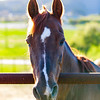 Greengate Ranch_017