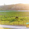 Greengate Ranch_150
