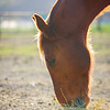 Greengate Ranch_032