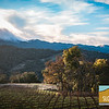 Justin Vineyards_035