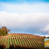 Justin Vineyards_014