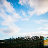 Justin Vineyards_015