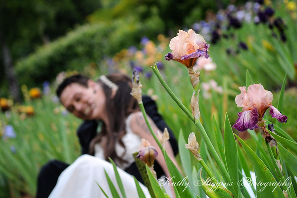 High Sierra Iris Garden