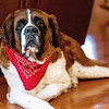 st-bernard-dog-lewes-historical-society-de-wedding-kate-timbers-photography-4996