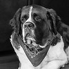 st-bernard-dog-lewes-historical-society-de-wedding-kate-timbers-photography-4995