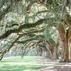 bride-bridesmaid-avenue-oaks-boone-hall-plantation-charleston-sc-wedding-kate-timbers-photography-8391