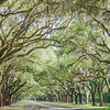 avenue-oaks-wormsloe-plantation-wedding-savannah-georgia-kate-timbers-photography-2464