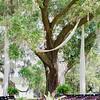 oak-tree-ceremony-old-wide-awake-plantation-charleston-sc-lowcountry-wedding-kate-timbers-photography-8160