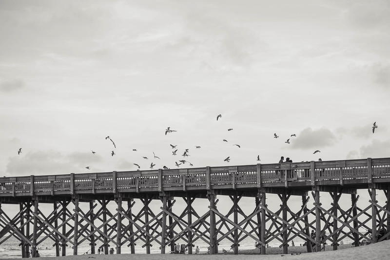 seagulls-fishing-pier-folly-beach-charleston-sc-kate-timbers-photography-1238