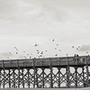 seagulls-fishing-pier-folly-beach-charleston-sc-kate-timbers-photography-1238