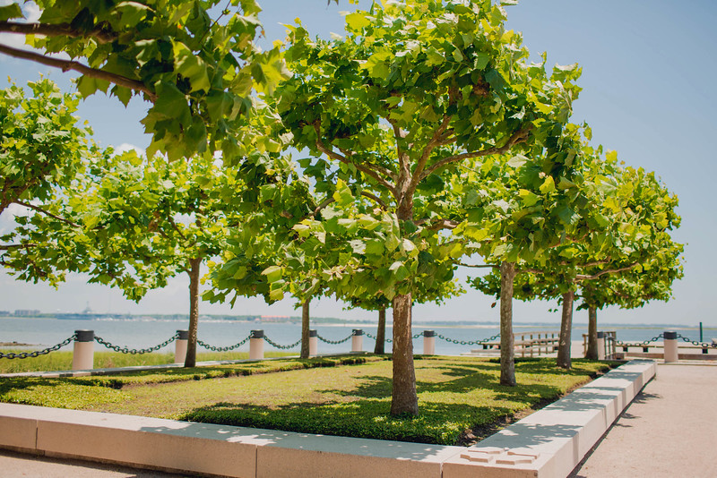 tree-waterfront-park-charleston-sc-kate-timbers-photography-1002