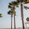 palm-tree-ceremony-seabrook-island-club-johns-island-sc-lowcountry-wedding-kate-timbers-photography-8224