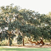oak-spanish-moss-boone-hall-plantation-charleston-sc-lowcountry-wedding-kate-timbers-photography-8113