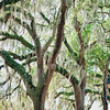 spanish-moss-tree-wedding-savannah-georgia-kate-timbers-photography-2412