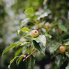 pears-stone-manor-middletown-md-wedding-kate-timbers-photography-7004