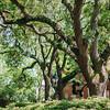 oak-tree-spanish-moss-wedding-savannah-georgia-kate-timbers-photography-2462
