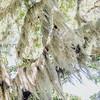 spanish-moss-wedding-savannah-georgia-kate-timbers-photography-2473