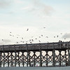 seagulls-fishing-pier-folly-beach-charleston-sc-kate-timbers-photography-1239