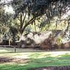 cotton-dock-torch-smoke-boone-hall-plantation-charleston-sc-lowcountry-wedding-kate-timbers-photography-8115