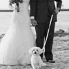 bride-groom-pet-dog-beach-lewes-de-wedding-kate-timbers-photography-4243